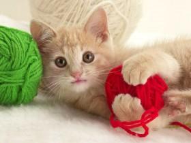 chaton-pelotes-de-laine